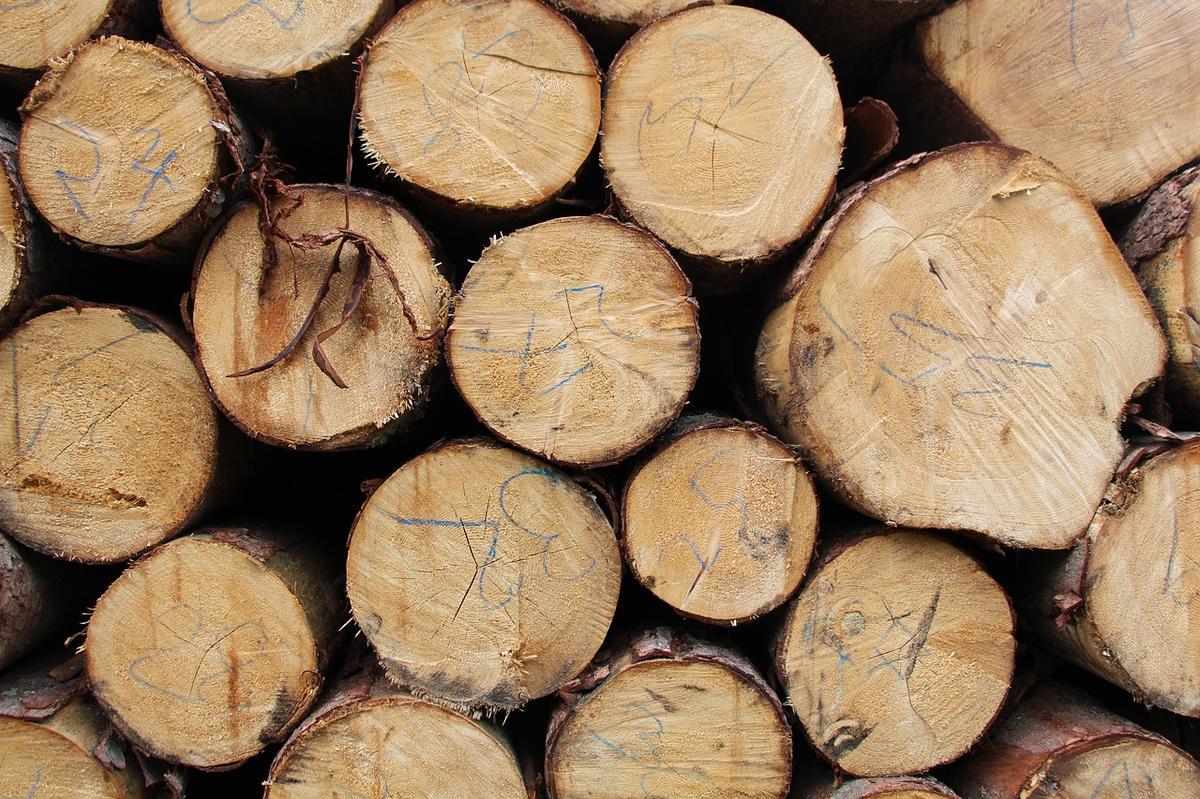 Monitoring dřeva